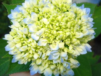 Flowers_014